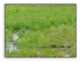 United OBL Wetland Mixture
