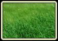 Grass Pasture Mixture